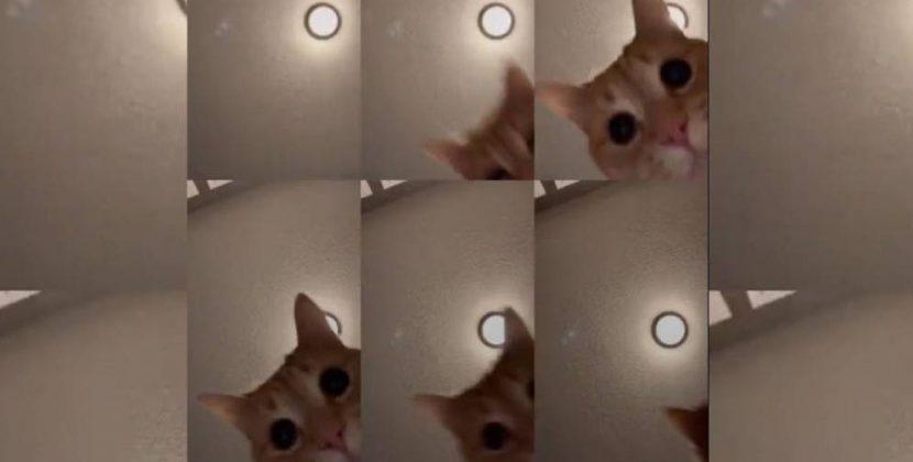 Un gato es el nuevo rey de Tik Tok, la plataforma de micro vídeos